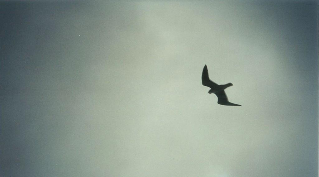 bird_lives