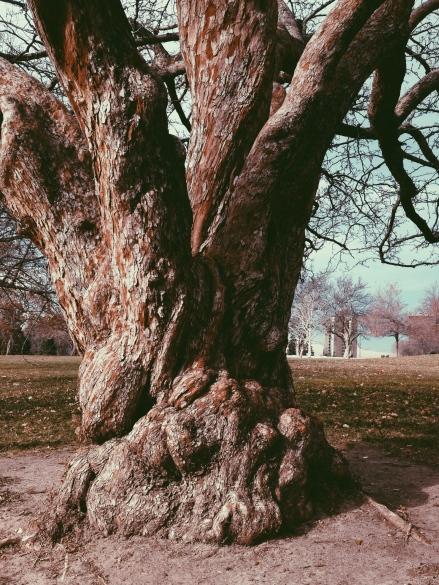 Knob Tree